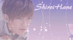 ShiroiHane